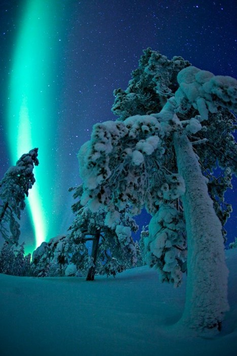 aurora borealis Forest Finland winter destination WIN! g rated
