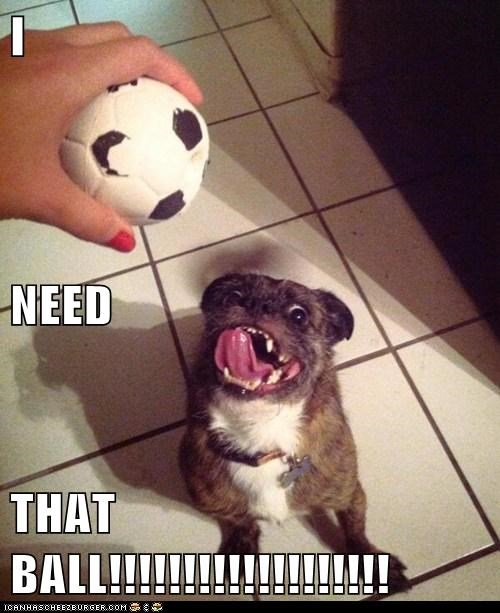 I  NEED THAT BALL!!!!!!!!!!!!!!!!!!!