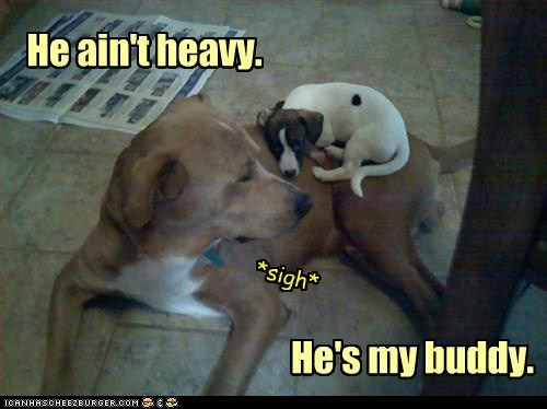 dogs,heavy,friends,cuddling,what breed,buddies