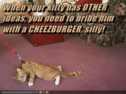 Cheezburger Image 6956909312
