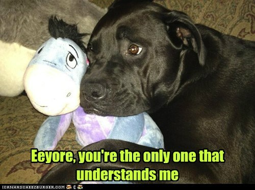 dogs toy stuffed animal sad dog cuddles eeyore lonely what breed