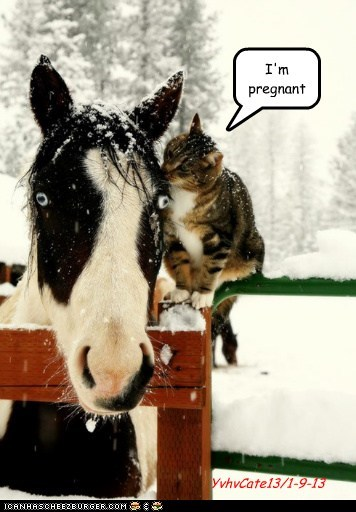 shock secrets scared whispering pregnant horses Cats - 6957458176