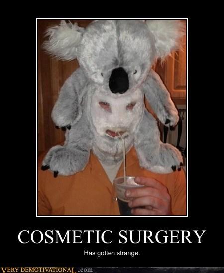 wtf,koala,cosmetic surgery