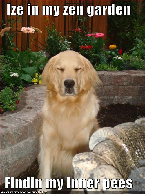 cute garden golden retriever peace - 695778560