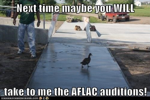 auditions,Aflac,ducks,ruined,tracks,walking,cement,next time
