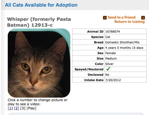 adoption,pasta batman,Cats,name