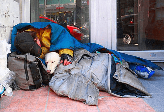 dogs heartwarming photos homeless - 6958341