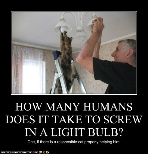 HOW MANY HUMANS DOES IT TAKE TO SCREW IN A LIGHT BULB? One, if there is a responsible cat properly helping him.