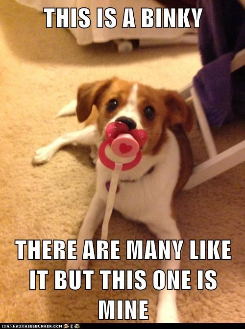 dogs pacifier puppies binky mine binkie what breed - 6958561280