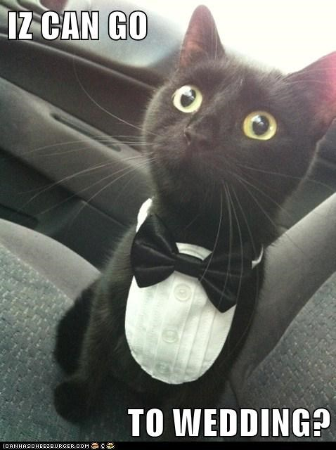 IZ CAN GO                   TO WEDDING?