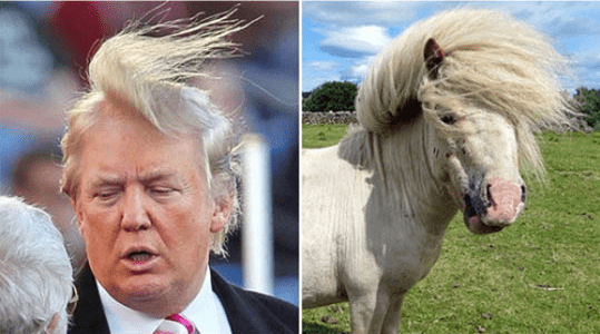 animals that look like donald trump