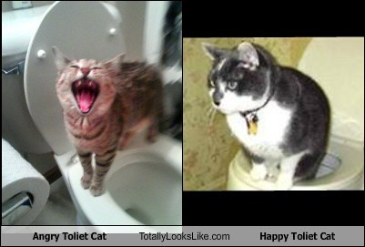 Angry Toliet Cat Totally Looks Like Happy Toliet Cat