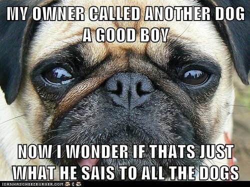 pug good boy confused - 6958743552