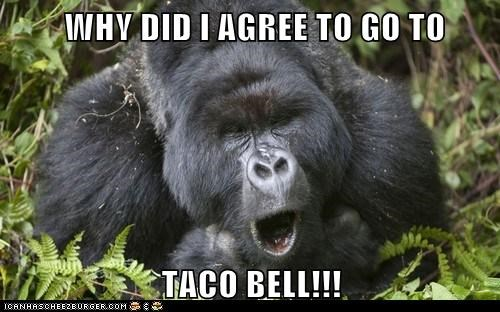 taco bell gorillas pooping why - 6958761728