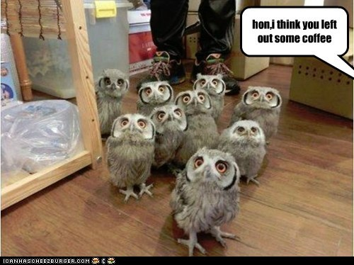 caffeine owls coffee awake - 6958843904