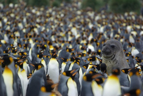 antarctica seal Awkward penguins cold winter - 6959028480