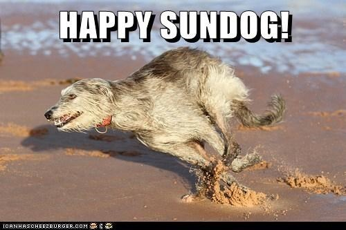 happy sundog ocean beach running Sundog what breed - 6959148800