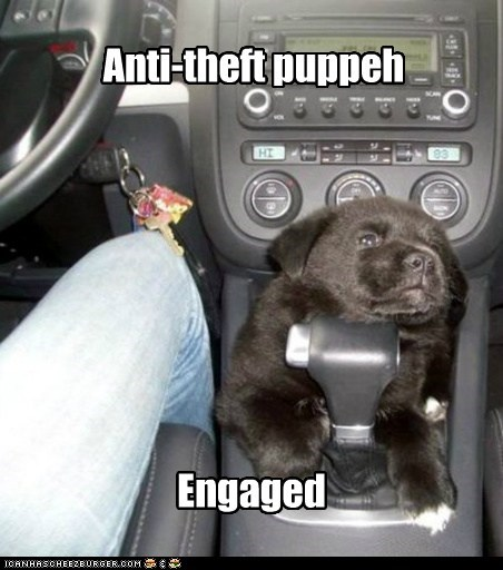 dogs lock car puppies anti-theft what breed