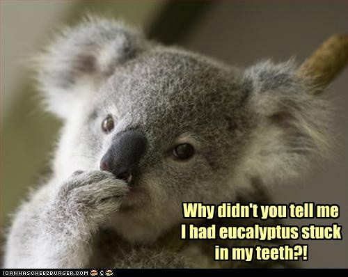 embarrassed stuck teeth friends koalas eucalyptus - 6959436288