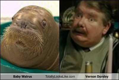 Harry Potter,vernon dursley,TLL,walrus