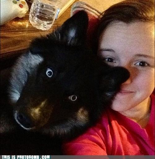 intruding,pets,dogs