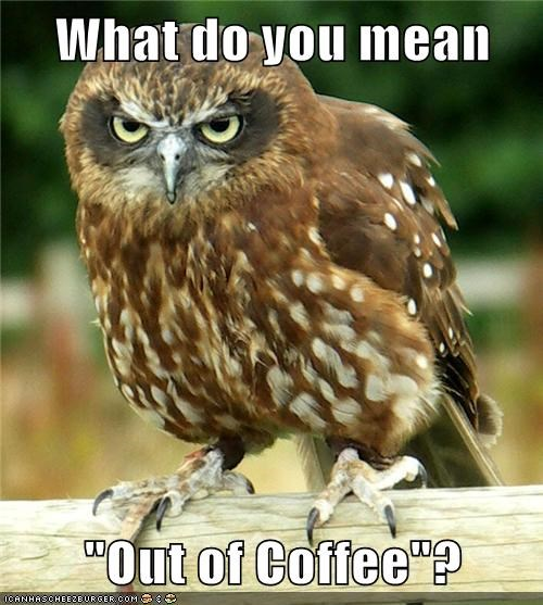 out,what do you mean,owls,coffee,angry
