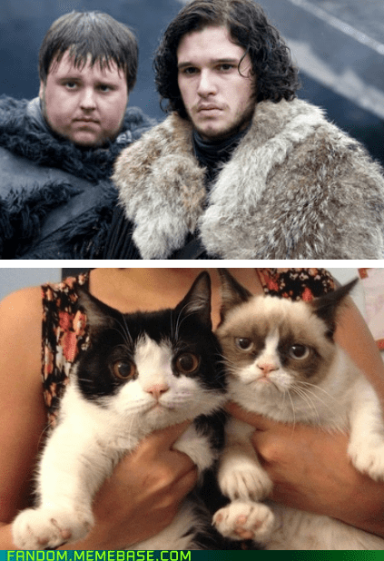 crossover Game of Thrones Grumpy Cat - 6961315328