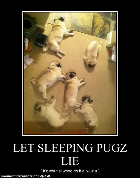 LET SLEEPING PUGZ LIE ( it'z whut ai wood do if ai wuz u )