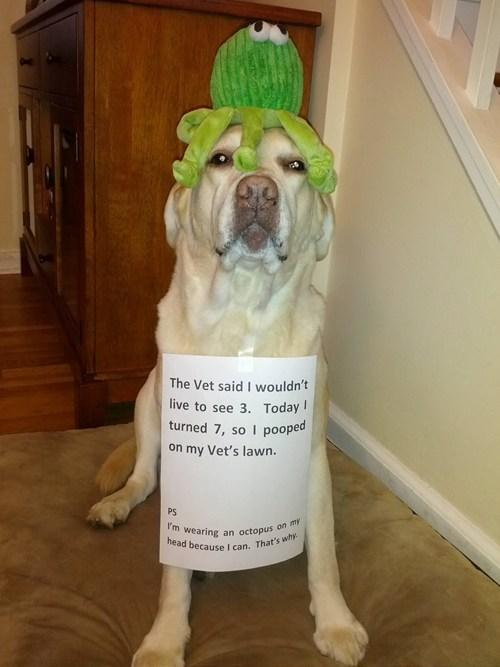 dogs birthday revenge dog shaming vet - 6961334528