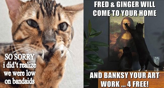 lolcats Memes Cats funny - 6961413