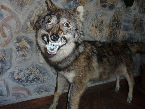 taxidermy happy derp - 6961442304