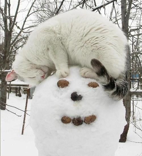 cyoot kitteh of teh day winter snowman - 6961697792