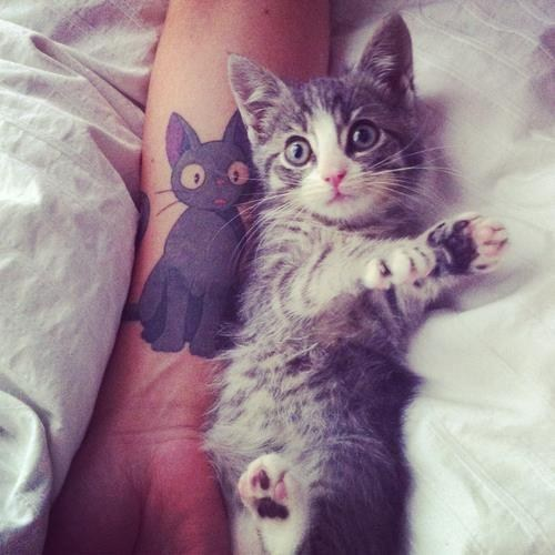 cyoot kitteh of teh day,kitten,tattoo,Cats