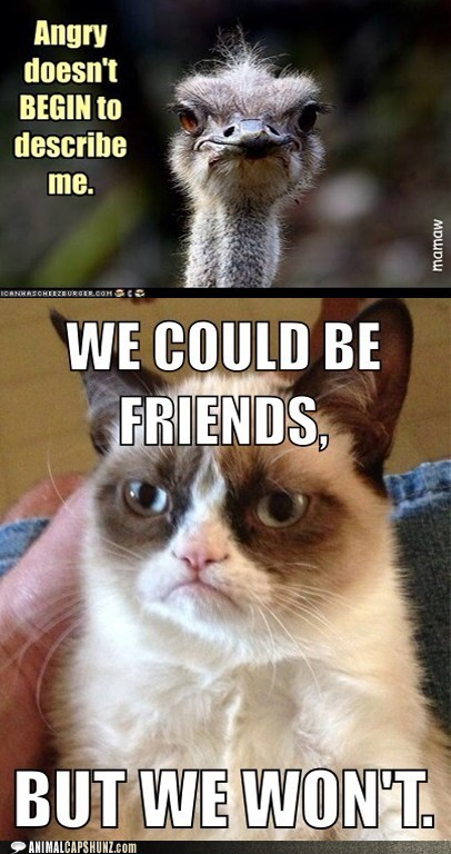 ostriches friends wont angry Grumpy Cat - 6961809408