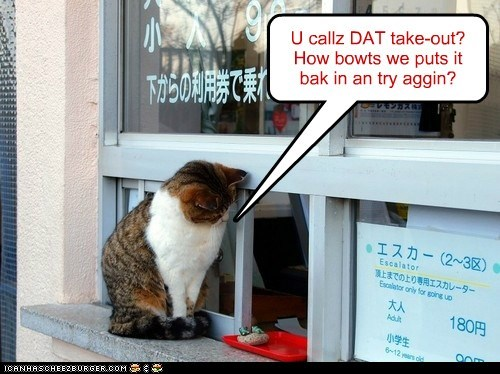 cat take out food noms funny - 6962080000