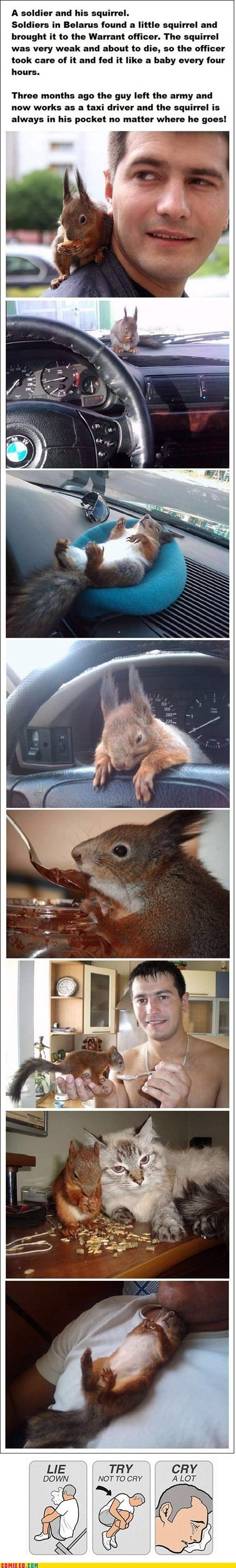 try not to cry,squirrel,cute,solider,restoring faith in humanity week