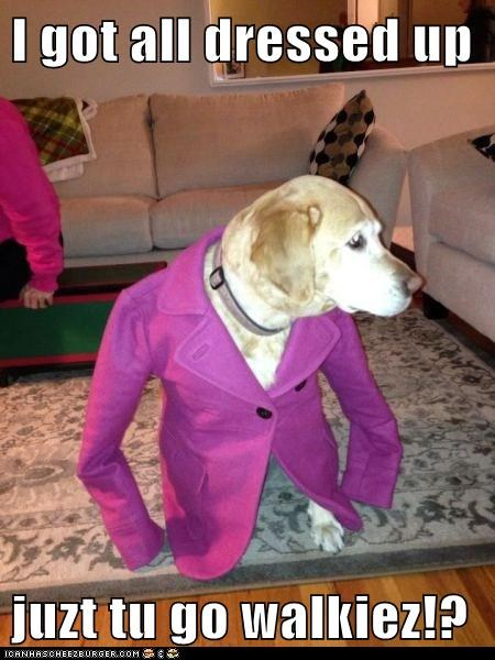 dogs labrador walks over dressed clothes - 6962352384