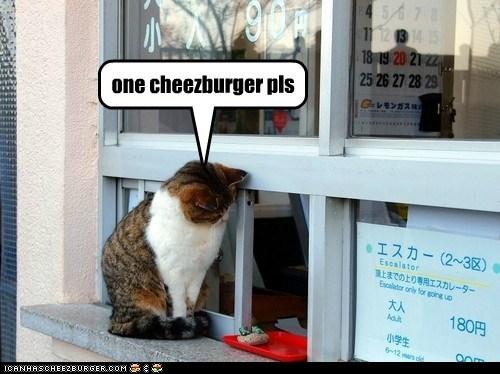 Cheezburger Image 6962794496
