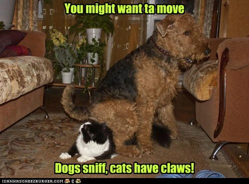 You might want ta move Dogs sniff, cats have claws!