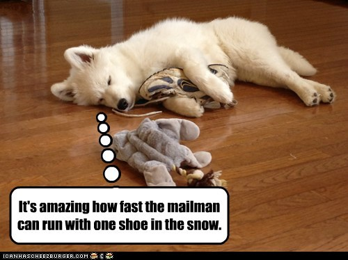 run away snow mailman chasing what breed shoe resting - 6962947840