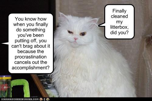 litterbox cat litter box funny - 6963110144