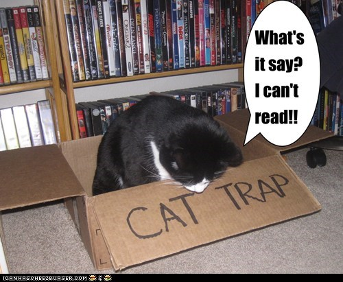box read words Cats funny