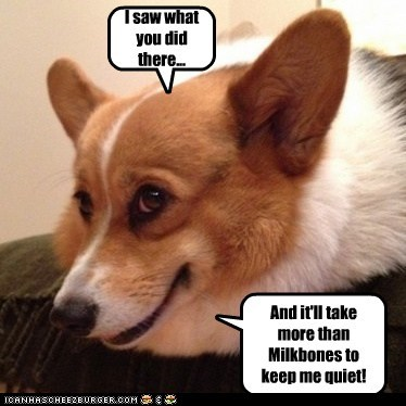 dogs blackmail i saw what you did corgi - 6963656960