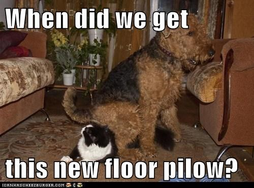 sitting on the cat Pillow dogs floor what breed Cats - 6963844608