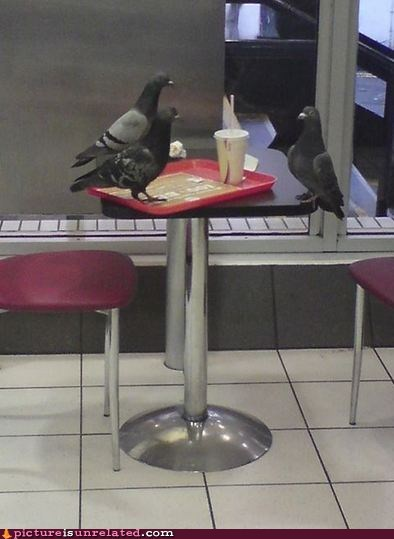 pigeon,birds,fast food