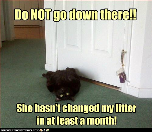 Do NOT go down there!! She hasn't changed my litter in at least a month!