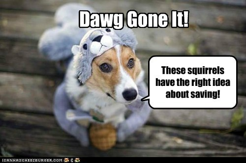 These squirrels have the right idea about saving! Dawg Gone It!