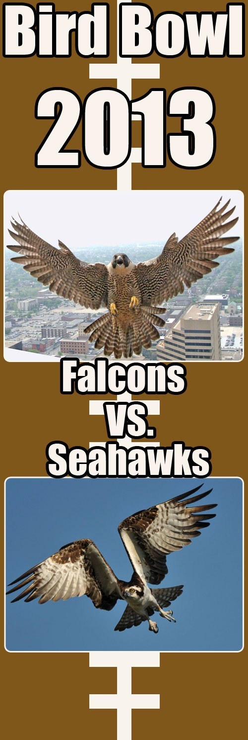 sports falcons playoffs seahawks football - 6964913408