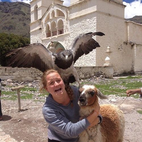 goat hand it over bird animals - 6964950528
