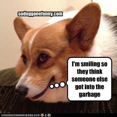 I'm smiling so they think someone else got into the garbage sodoggonefunny.com
